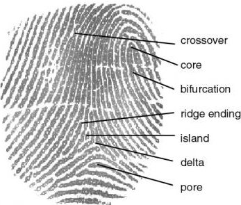 fingerprint_definition